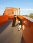 Long Hair on the Bridge